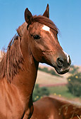 HOR 01 RK1450 02