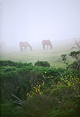 HOR 01 RK1484 02