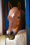 HOR 01 RK1489 01