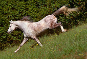 HOR 01 RK1499 03
