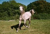 HOR 01 RK1515 12
