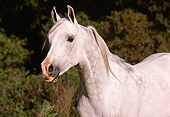HOR 01 RK1526 08
