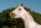 HOR 01 RK1527 01