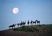 HOR 01 RK1559 07
