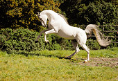 HOR 01 RK1572 10