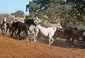 HOR 01 RK1599 24