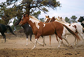 HOR 01 RK1634 14