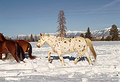 HOR 01 RK1649 02