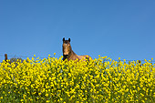 HOR 01 RK1742 01