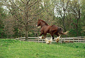 HOR 01 RS0044 01