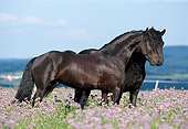 HOR 01 SS0101 01