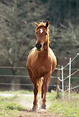 HOR 01 SS0119 01