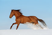 HOR 01 SS0120 01