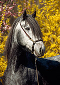 HOR 01 SS0123 01