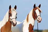 HOR 01 SS0132 01