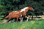 HOR 01 SS0133 01