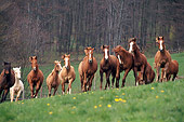HOR 01 SS0134 01