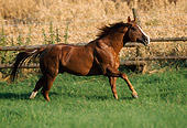 HOR 01 SS0135 01