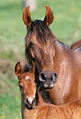 HOR 01 SS0137 01