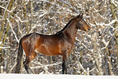 HOR 01 SS0141 01