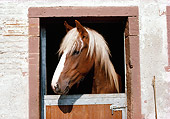 HOR 01 SS0146 01