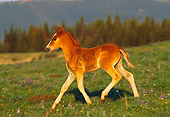 HOR 01 TL0003 01