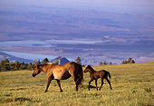 HOR 01 TL0005 01