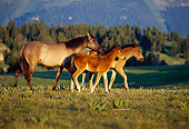 HOR 01 TL0006 01