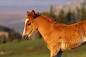 HOR 01 TL0008 01