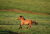 HOR 01 TL0009 01