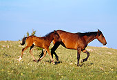 HOR 01 TL0011 01