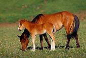 HOR 01 TL0014 01