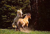 HOR 01 TL0015 01