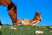HOR 01 TL0017 01