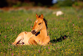 HOR 01 TL0018 01