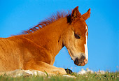 HOR 01 TL0019 01