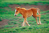HOR 01 TL0021 01