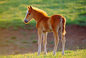 HOR 01 TL0022 01
