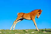 HOR 01 TL0023 01