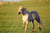 HOR 01 TL0025 01