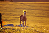 HOR 01 TL0026 01