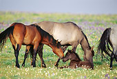 HOR 01 TL0030 01