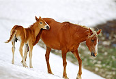HOR 01 TL0033 01