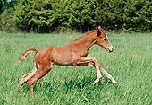 HOR 02 FA0001 01