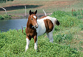 HOR 02 FA0002 01