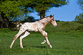 HOR 02 KH0030 01