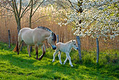 HOR 02 KH0036 01