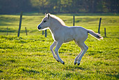 HOR 02 KH0040 01