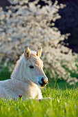HOR 02 KH0044 01