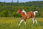 HOR 02 KH0046 01